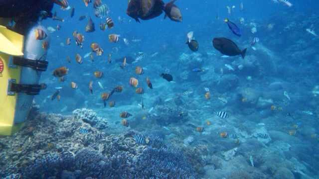 巴厘岛畅享游7天6晚