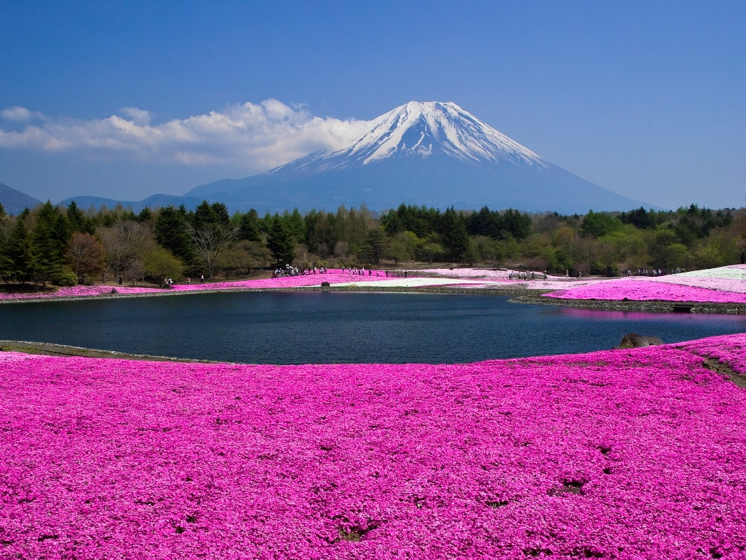 日本本州双古都双温泉6日游