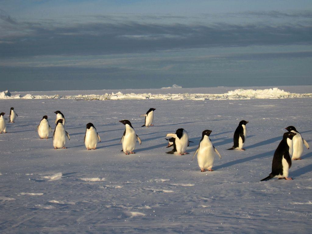 【洪迪斯號】巴西+阿根廷+智利+秘魯+南極32日28晚跟團游(含領隊,長城站,送沖鋒衣,復活節島,冰川國家公園,馬丘比丘)