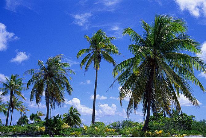 巴厘岛4晚6日跟团游(鹰航去直回转,全程泳池酒店连住,2天Free,海龟岛、玻璃底船、情人崖、海神庙、库塔海滩,无购物,赠精油spa、赠境外险)