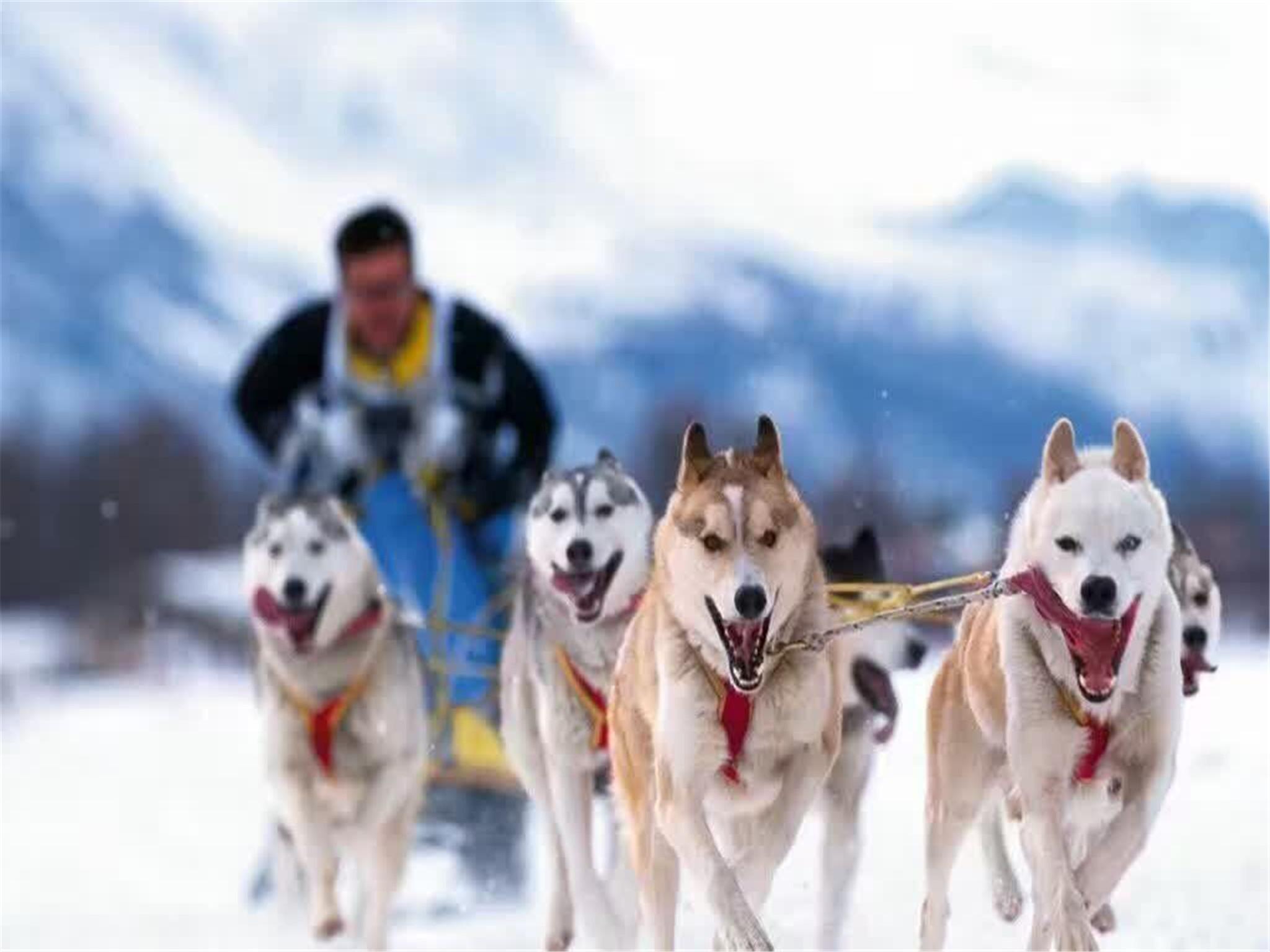 芬兰+北极光5晚7日游(AY/狗拉雪橇/鹿拉雪橇/境外领取跨越北极圈证书/30人精品团/送WiFi)