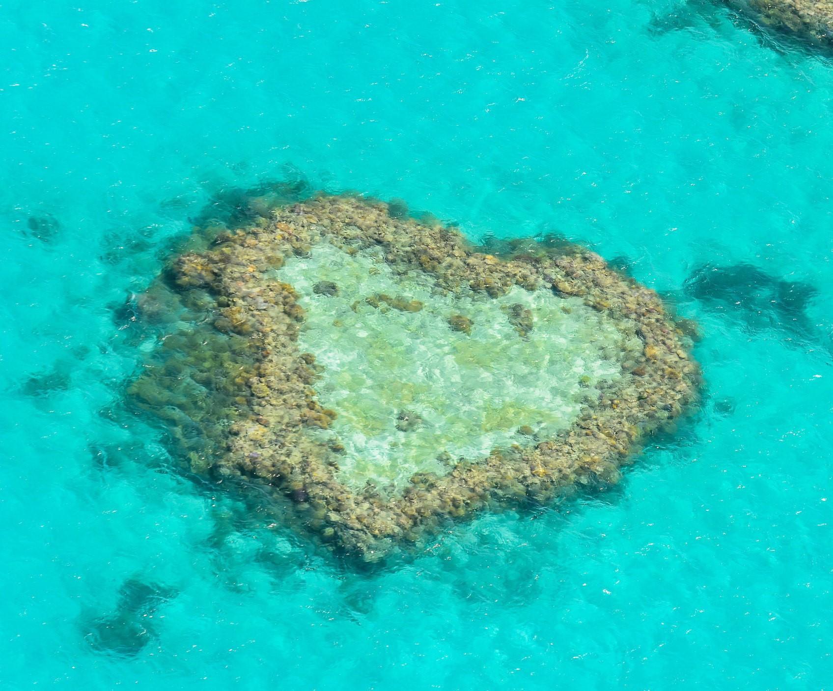 澳大利亚双岛一礁10晚12天(纯玩联运,海豚喂食、企鹅归巢、库伦宾,考拉合影、歌剧院、达令港、大洋路、墨尔本自由活动、蓝山公园、WIFI)