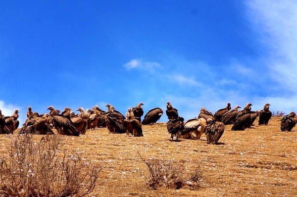 稻亚传奇-木格措、新都桥、高尔寺、海子山自然保护区、稻城、亚丁、泸定桥7日游