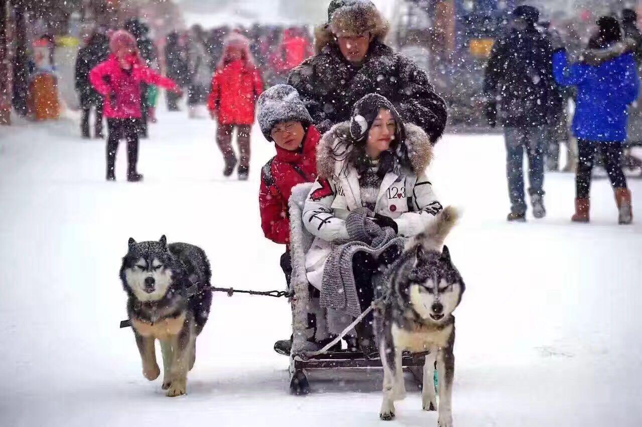【寒假】【雪域王者】哈尔滨、亚布力滑雪度假区、雪乡4晚5日游(双飞,1晚亚布力+1晚雪乡特色住宿,升级2晚网评五星酒店,0购物0自费)