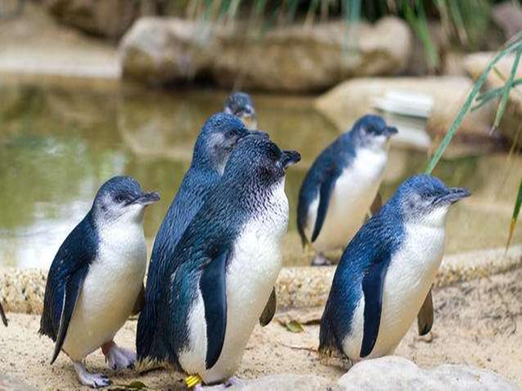 【暑期】新西兰南北岛9晚12日(纯玩+峡湾公园+库克山+萤火虫+企鹅+皇后镇)NZ