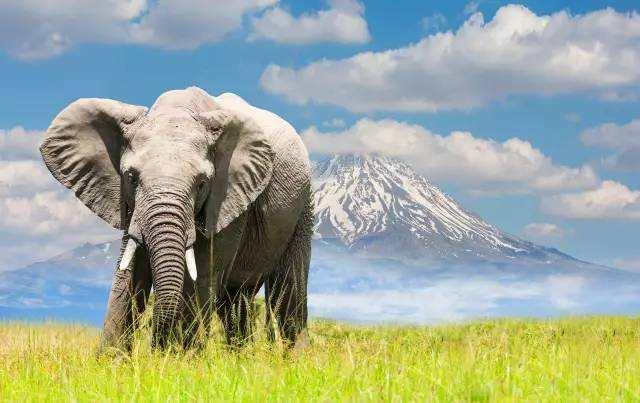 坦桑尼亚7晚10天之旅(塞伦盖蒂国家公园+恩戈罗恩戈+桑给巴尔岛+大象的故乡塔兰吉雷)