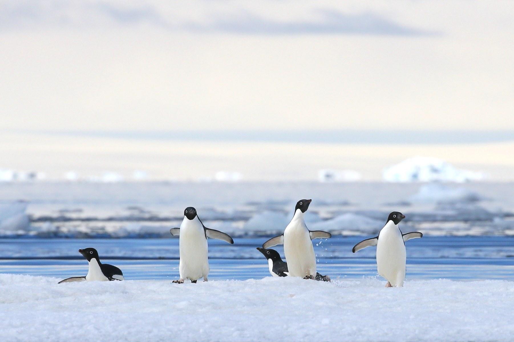 智利+南极+象岛16日12晚跟团游·小型高奢1AS级抗冰探险邮轮Resolute坚韧号 +华人整包船+超长登陆+丰富探险活动