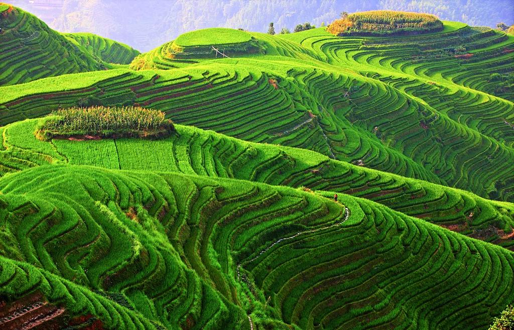 梵高画笔绘龙脊桂林双飞5日跟团游
