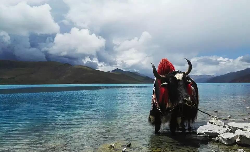 【壯美青藏-雪域光芒】VIP 3至5人行 中旅旅行自組9日游