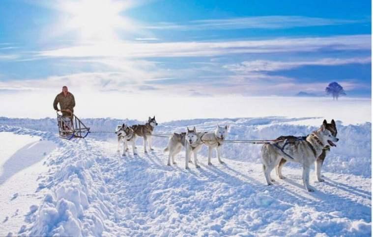 【春節】 質品4鉆 芬蘭一地7天5晚(AY+狗拉雪橇+越野滑雪+圣誕老人村)