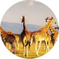 【非洲·撒野】南非12天EK(花园大道+太阳城)