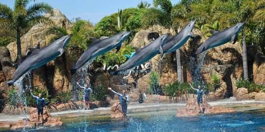 【春节】澳凯墨8晚10日(纯玩+大堡礁+直升机+大洋路+海洋或梦幻世界)MU