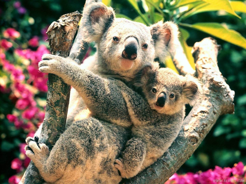 星游澳洲8天6晚尊享五星(有袋星球|生态课堂|飞翔体验|澳式度假)