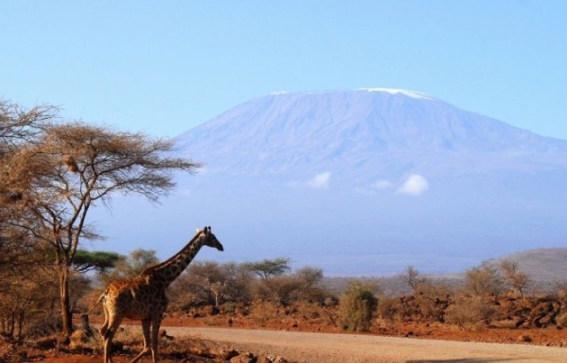 【动物大迁徙】肯尼亚12天(QR+保证老树顶酒店+四大国家公园+两大湖泊+内陆一段飞机)